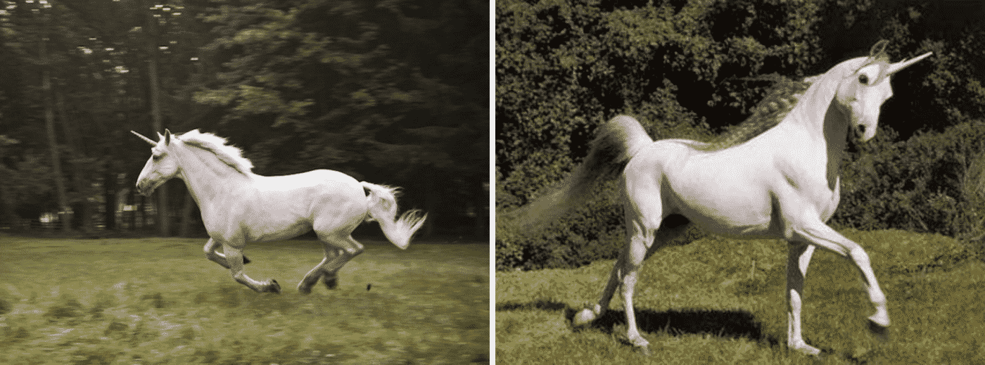 Unicorn Running In The Meadow