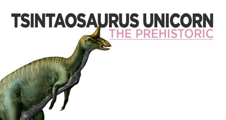 Tsintaosaurus The Prehistoric Unicorn